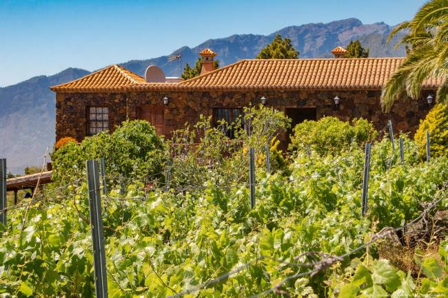 Property with vineyards and house on La Palma