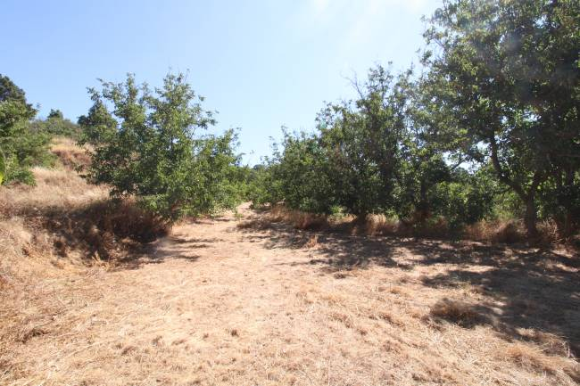 Land with walnut trees in Garafia